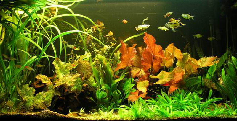 unterwasser landschaft lotuswelt f r 60 l aquarium ebay. Black Bedroom Furniture Sets. Home Design Ideas