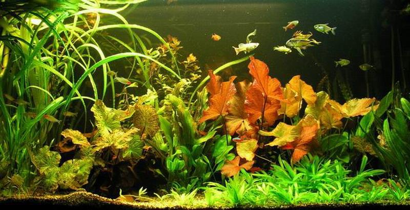 Unterwasser-Landschaft Lotuswelt f?r ein 100 Liter Aquarium wasserflo