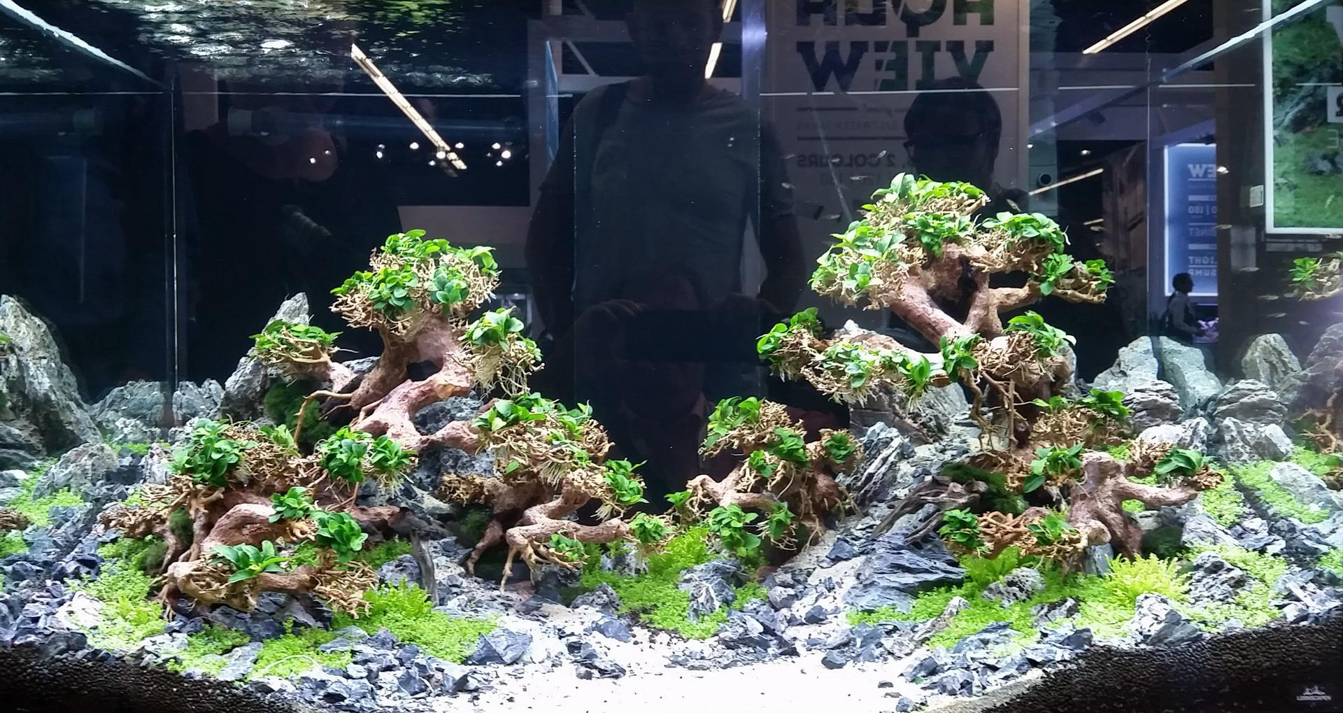 Aqua Bonsai Wurzel Small Aquascaping Drachenbaum Traumwurzel Klein W