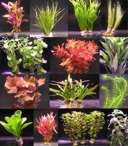 ber 40 aquarium pflanzen buntes sortiment wasserflora s040. Black Bedroom Furniture Sets. Home Design Ideas
