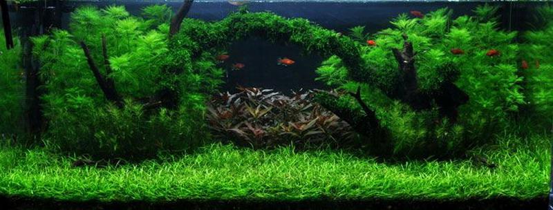 unterwasser landschaft moosbr cke f r 100 liter aquarium wasserflora. Black Bedroom Furniture Sets. Home Design Ideas