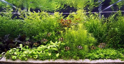 ... Landschaft Holland-Aquarium fuer ein 200 Liter Aquarium wasserflora S4