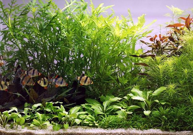 unterwasser landschaft holland aquarium f r ein 100 liter aquarium was. Black Bedroom Furniture Sets. Home Design Ideas